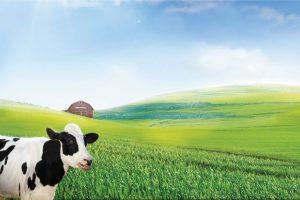 LNST của Vinamilk (mẹ) tăng 32% trong 6 tháng đầu năm, thị trường nước ngoài tăng mạnh