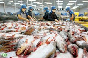 Quy định mới của Bộ Nông Nghiệp Mỹ ảnh hưởng như thế nào đối với cá tra Việt Nam