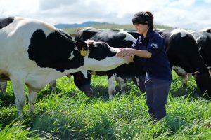 Cập nhật cổ phiếu VNM - Giá sữa bột tăng có thể gây áp lực lên biên lợi nhuận năm 2020