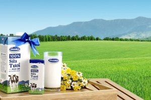 Cập nhật cổ phiếu VNM - Hoàn thành thâu tóm 75% cổ phần tại GTN Foods Sữa Mộc Châu